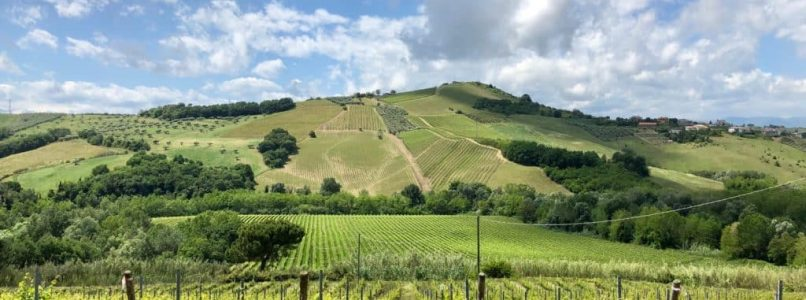 Abruzzo, where Montepulciano is born. And not only