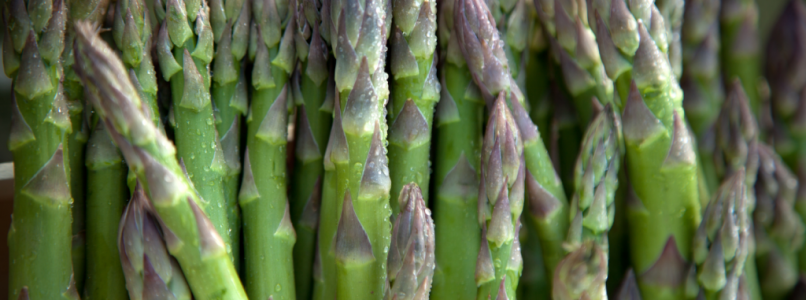 All about asparagus: mini guide to get to know them better