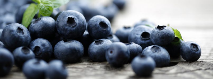 All crazy for blueberries!