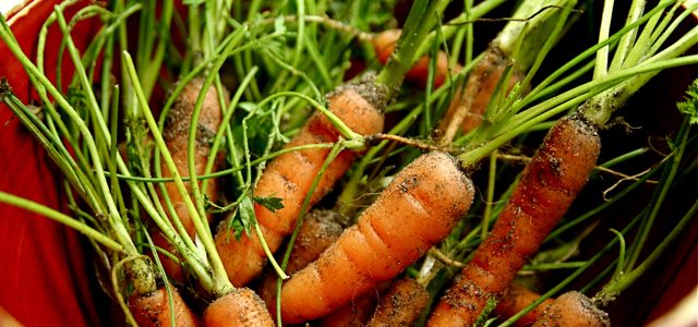 Baby vegetables: food trend that never goes out of style