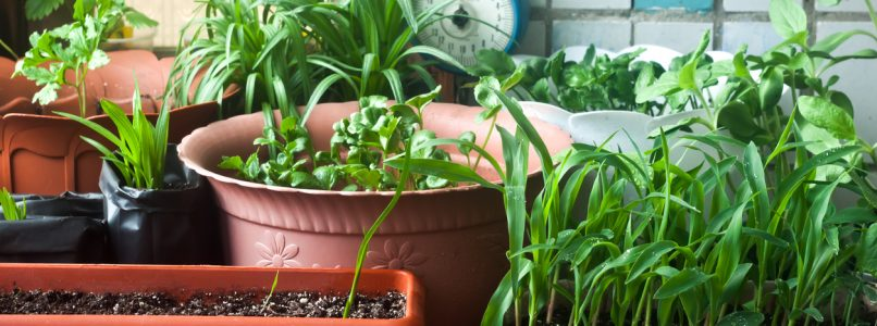 Garden on the balcony: what to plant in September
