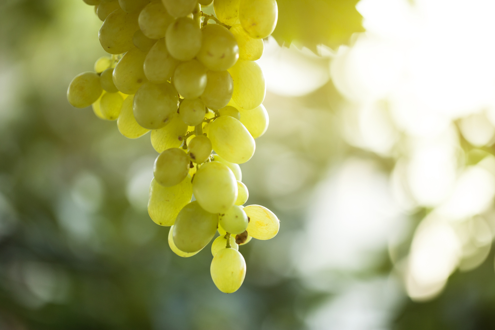 Grapes is good