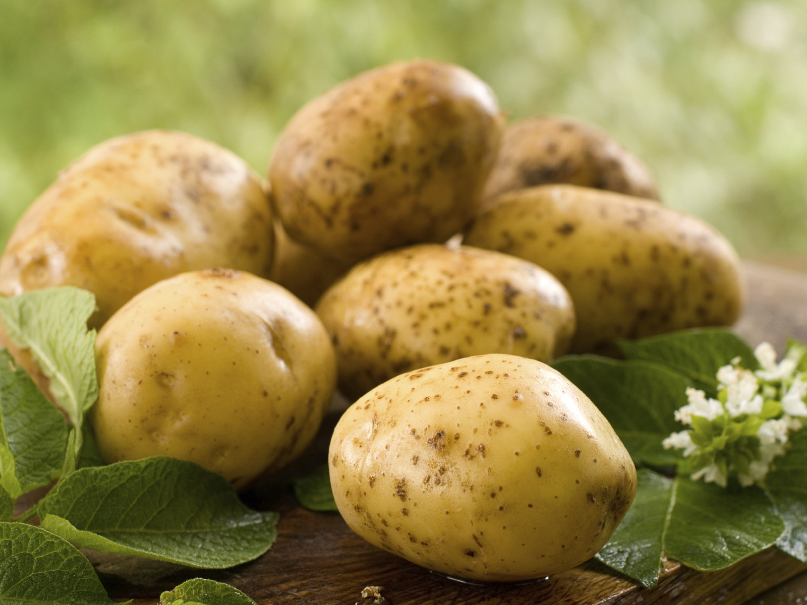 How to cook potatoes. But also some of their history