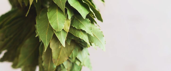How to use bay leaves