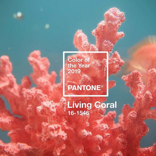 Living Coral Pantone 2019, the ideal color for food bloggers