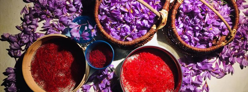 Morgex: the highest saffron in Italy