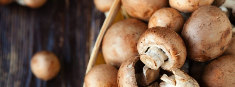 The nutritional values ​​of mushrooms