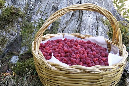 The raspberries of the Cimini Mountains. And two recipes