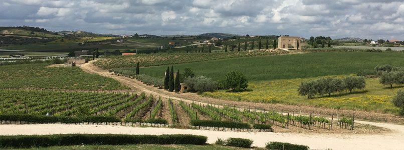 The wine of the week: Adènzia Bianco 2018 Baglio del Cristo di Campobello