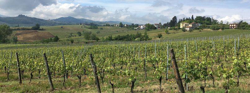 The wine of the week: Colli Piacentini Malvasia Emiliana 2018 Lusenti