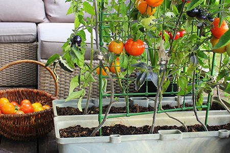 Vegetable garden: fights stress and makes us happy