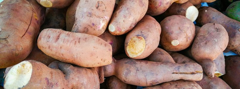 Yacon, the South American superfood tuber that is conquering the world